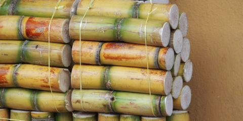 Banos canne a sucre équateur