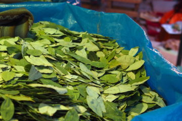 cuisine traditionnelle de bolivie : feuille de coca