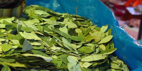 cuisine traditionnelle de bolivie : feuille de coca
